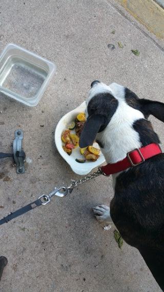 Winston enjoying his meal